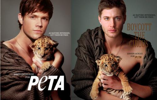 Recap of thi... Jensen Ackles Peta